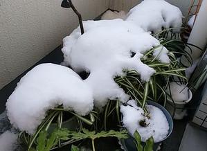 Snow1c
